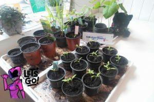 Mandlgasse Garten Pflanzen